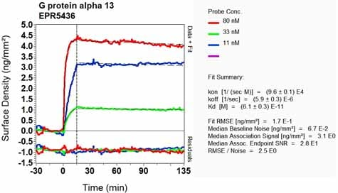 Other - Anti-GNA13 antibody [EPR5436] (ab128900)