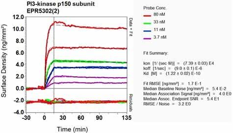 Other - Anti-VPS15 antibody [EPR5302(2)] (ab128903)