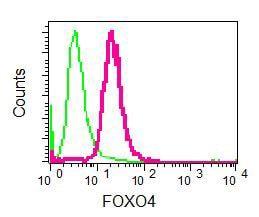 Flow Cytometry - Anti-FOXO4/AFX antibody [EPR5442] (ab128908)
