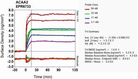 Other - Anti-ACAA2 antibody [EPR6733] (ab128911)