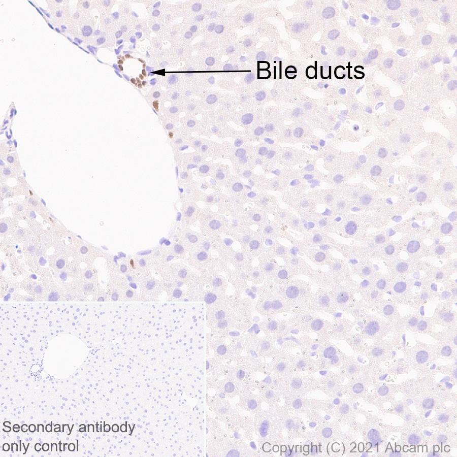 Immunohistochemistry (Formalin/PFA-fixed paraffin-embedded sections) - Anti-HNF-1B antibody [EPR6334(2)] (ab128912)