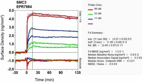 Other - Anti-SMC3 antibody [EPR7984] (ab128919)