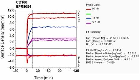 Other - Anti-CD160 antibody [EPR8054] (ab128954)