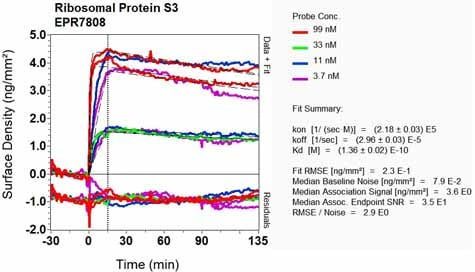 Other - Anti-RPS3 antibody [EPR7808] - Ribosome Marker (ab128995)