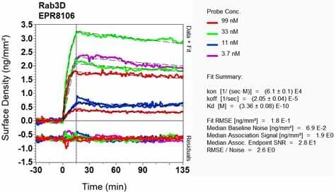 OI-RD Scanning - Anti-Rab3D antibody [EPR8106] (ab128997)
