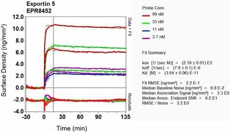 OI-RD Scanning - Anti-Exportin-5 antibody [EPR8452] (ab129006)