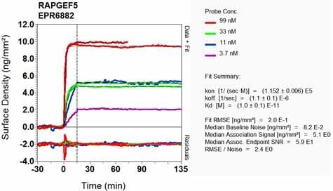 Other - Anti-RAPGEF5 antibody [EPR6882] (ab129008)