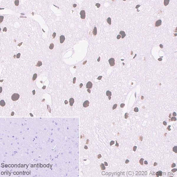 Immunohistochemistry (Formalin/PFA-fixed paraffin-embedded sections) - Anti-RAPGEF5 antibody [EPR6882] (ab129008)