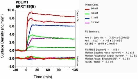 OI-RD Scanning - Anti-PDLIM1/CLP36 antibody [EPR7186(B)] (ab129015)