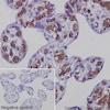 Immunohistochemistry (Formalin/PFA-fixed paraffin-embedded sections) - Anti-Glycophorin A antibody [EPR8200] (ab129024)