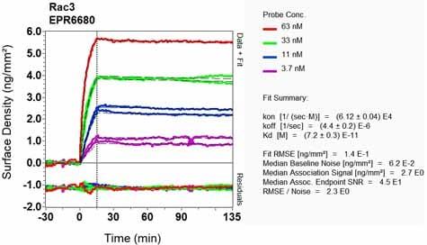 Other - Anti-RAC3 antibody [EPR6680] (ab129062)