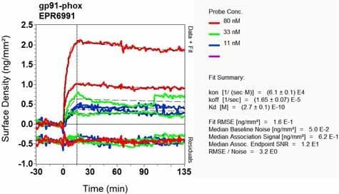 Other - Anti-NOX2/gp91phox antibody [EPR6991] (ab129068)