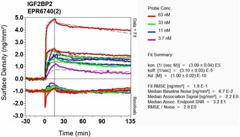 Other - Anti-IGF2BP2/IMP-2 antibody [EPR6740(2)] (ab129071)