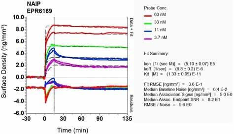 OI-RD Scanning - Anti-NAIP antibody [EPR6169] (ab129079)