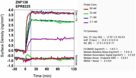 OI-RD Scanning - Anti-ZNF136 antibody [EPR8225] (ab129100)
