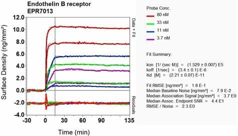 Other - Anti-Endothelin B Receptor/ET-B antibody [EPR7013] (ab129102)