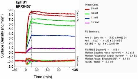 Other - Anti-Eph receptor B1/NET antibody [EPR6457] (ab129103)