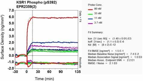 Other - Anti-KSR1 (phospho S392) antibody [EPR2359(2)] (ab129111)