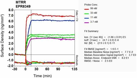 Other - Anti-MTRR/MSR antibody [EPR8349] (ab129159)