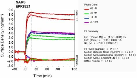 OI-RD Scanning - Anti-NARS antibody [EPR8221] (ab129162)