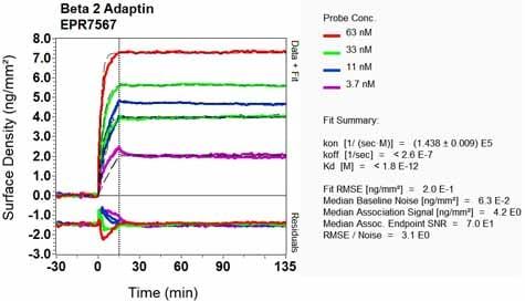 Other - Anti-AP2B1 antibody [EPR7567] (ab129168)