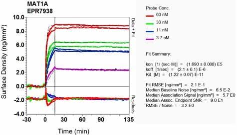 OI-RD Scanning - Anti-MAT1A antibody [EPR7938] (ab129176)