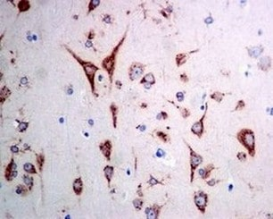 Immunohistochemistry (Formalin/PFA-fixed paraffin-embedded sections) - Anti-ERGIC3 antibody [EPR8141] (ab129179)