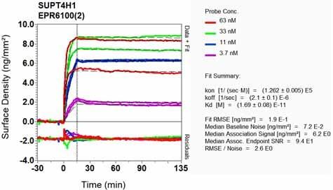 Other - Anti-SUPT4H antibody [EPR6100(2)] (ab129187)