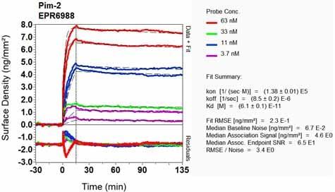 Other - Anti-PIM2 antibody [EPR6988] (ab129193)