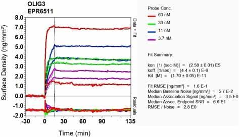 Other - Anti-Olig3 antibody [EPR6511] (ab129197)