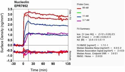 OI-RD Scanning - Anti-Nucleolin antibody [EPR7952] (ab129200)