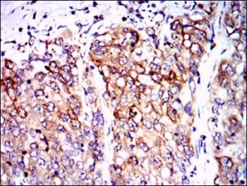 Immunohistochemistry (Formalin/PFA-fixed paraffin-embedded sections) - Anti-PPP2R4 antibody [4D9] (ab129244)
