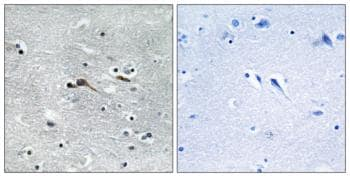Immunohistochemistry (Formalin/PFA-fixed paraffin-embedded sections) - Anti-CYTL1 antibody (ab129767)