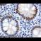 Immunohistochemistry (Formalin/PFA-fixed paraffin-embedded sections) - Anti-SP1 antibody (ab13370)