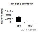ChIP - Anti-SP1 antibody - ChIP Grade (ab13370)