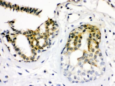 Immunohistochemistry (Formalin/PFA-fixed paraffin-embedded sections) - Anti-Cdk7 antibody [IMD-26] (ab130001)