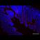 Immunohistochemistry (Formalin/PFA-fixed paraffin-embedded sections) - Anti-Villin antibody [SP145] (ab130751)