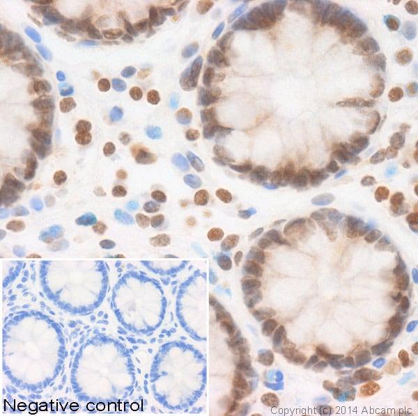 Immunohistochemistry (Formalin/PFA-fixed paraffin-embedded sections) - Anti-Histone H2B (glcnac S112) antibody (ab130951)