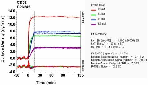 Other - Anti-CD32 antibody [EP6243] (ab131051)
