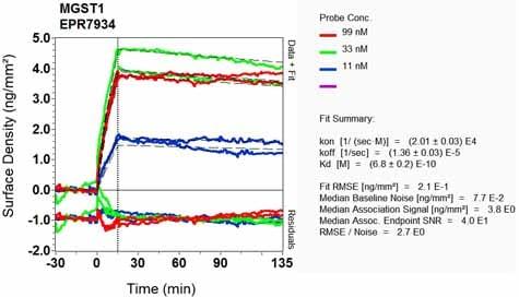 Other - Anti-MGST1 antibody [EPR7934] (ab131059)