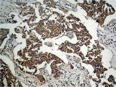Immunohistochemistry (Formalin/PFA-fixed paraffin-embedded sections) - Anti-GSK3 beta (phospho S9) antibody (ab131097)
