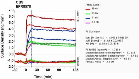 OI-RD Scanning - Anti-CBS antibody [EPR8578] (ab131155)