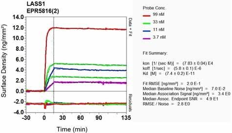 Other - Anti-Ceramide synthase 1/LAG1 antibody [EPR5816(2)] (ab131169)