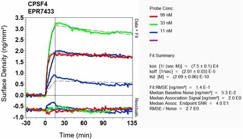 Other - Anti-CPSF30/NAR antibody [EPR7433] (ab131218)