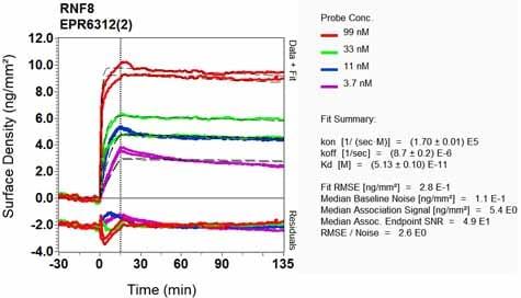 Other - Anti-RNF8 antibody [EPR6312(2)] (ab131221)