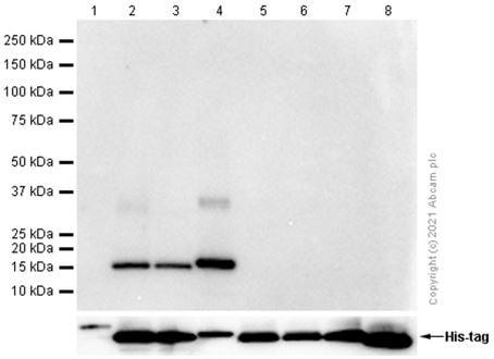 Western blot - Anti-Hemoglobin subunit delta antibody [EPR8322(B)] (ab131225)