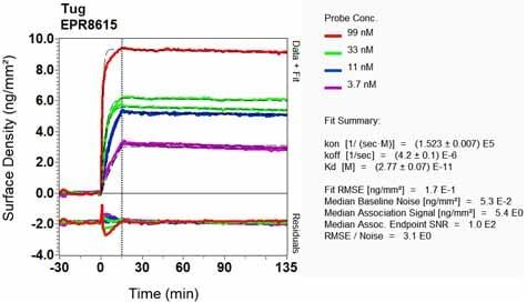 Other - Anti-TUG antibody [EPR8615] (ab131237)