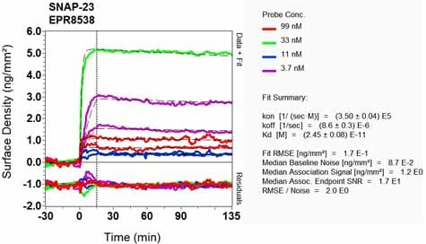 OI-RD Scanning - Anti-SNAP23 antibody [EPR8538] (ab131242)
