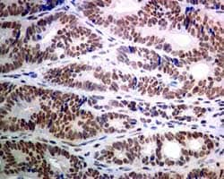 Immunohistochemistry (Formalin/PFA-fixed paraffin-embedded sections) - Anti-USP39 antibody [EPR8683] (ab131244)