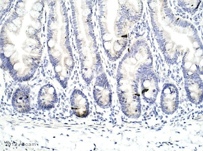 Immunohistochemistry (Formalin/PFA-fixed paraffin-embedded sections) - Anti-Peptide YY/PYY antibody (ab131246)